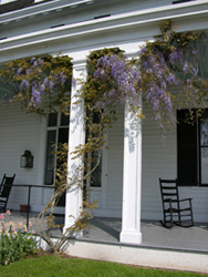 Fig.26, Victorian porch with wisteria